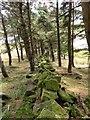 SE0800 : Broken wall in trees by Graham Hogg