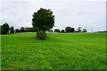 H5371 : Green fields, Bancran by Kenneth  Allen
