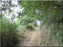 SX6746 : Avon Estuary Walk in Doctor's Wood, Bigbury by David Smith
