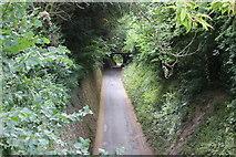 TQ1352 : Sunken bridleway, Polesden Lacey by M J Roscoe