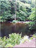 SX7489 : River Teign: towards Fingle Weir by Martin Bodman