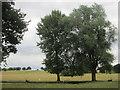 SP9633 : Deer, Woburn Deer Park by Peter S