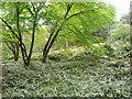 C0221 : In the woodland garden. Glenveagh Castle by Humphrey Bolton