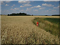 TL2581 : Wheat field and bird scarer by Hugh Venables