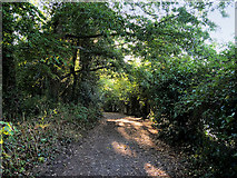 SX9364 : Footpath towards Babbacombe Road by David Dixon