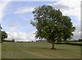 ST6161 : A tree in a field by Neil Owen