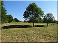 TL4356 : Grantchester Meadows in a dry summer by John Sutton