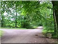 ST4294 : Wentwood at Cadira Beeches, 2 by Jonathan Billinger
