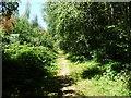 TQ5538 : Public footpath from Ramslye Wood, below High Rocks by Christine Johnstone