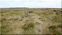 SK2775 : Barbrook stone circle by David Lally