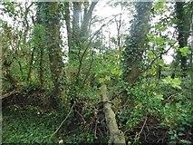 SP2810 : Barrow Plantation by David Howard