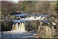 NY9027 : River Tees, Low Force by David Robinson