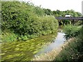 SE7971 : Weed in the River Derwent, Norton by Christine Johnstone