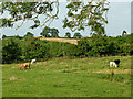 SP5972 : Grazing north-east of Crick in Northamptonshire by Roger  Kidd