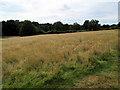 TQ8038 : Sissinghurst Castle Gardens by Paul Gillett