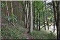 NT7127 : Woodland path to Eckford by Jim Barton