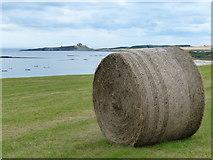 NU2424 : Bale next to the Northumberland Coast Path by Mat Fascione