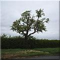 TF0432 : Roadside Ash by Bob Harvey