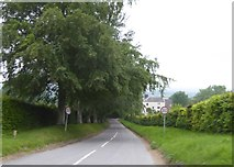 SU2886 : Tree-lined road to Knighton by David Smith