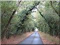 SU2688 : Wooded lane near Compton Beauchamp by Gareth James