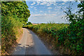 SS8406 : Mid Devon : Country Lane by Lewis Clarke