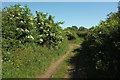 SE3172 : Little Studley Road by Derek Harper