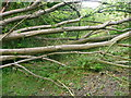 SE0823 : Fallen tree blocking Halifax FP675, Skircoat by Humphrey Bolton