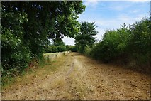 SP3102 : Public footpath to Buckland Road, Bampton, Oxon by P L Chadwick