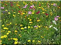 ST5971 : Flowers in a bed in Victoria Park by Philip Halling