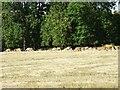 SP2013 : Fallow deer in Barrington Park by Philip Halling