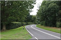SU9022 : The A272 near Easebourne by David Howard