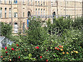 SE1337 : Ripening apples, Saltaire by Stephen Craven