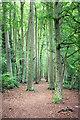 SU4629 : Footpath through the Beeches : Week 34