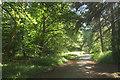 SE2954 : Path, Harlow Moor, Harrogate by Derek Harper