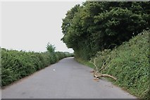 SU7923 : Access road by the A272, Rogate by David Howard