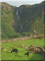 NY1800 : Cattle in Eskdale by Karl and Ali