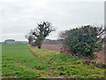 TG3133 : Hedgerow south of Paston Green by Robin Webster