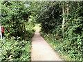 SE3900 : Trans Pennine Trail near Elsecar by David Dixon