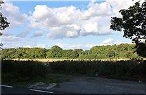 SU4633 : Fields by the A272, Littleton by David Howard