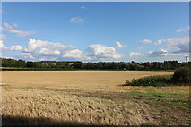 SU5032 : Field in Easton by David Howard
