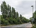TQ1861 : Christ Church Road by Ian Capper