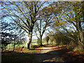 SU8911 : Goodwood Chalk Road and the racecourse by Chris Gunns