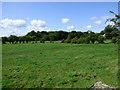 NS4666 : Farmland off Barnsford Road by Thomas Nugent