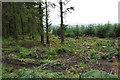 SO2087 : Cleared area in Long Plantation by Bill Boaden