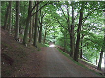 SK1987 : Track (bridleway) above Ladybower Reservoir (east bank) by JThomas