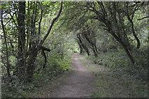 SP4508 : Thames Path, Wytham Woods by N Chadwick