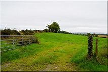 H4178 : An open field, Killinure by Kenneth  Allen
