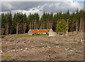 NH5034 : Cleared forest, Wester Cudrish by Craig Wallace