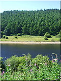 SK1786 : View over Ladybower Reservoir by JThomas