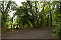 NU2002 : Track beside the River Coquet by Graham Robson